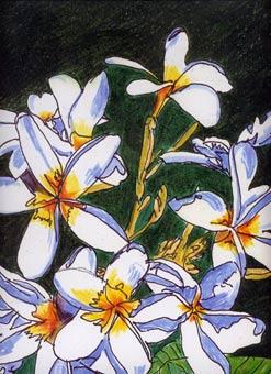"""Plumeria"" by Dane Botino"