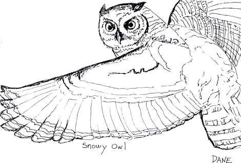 """White Owl"" by Dane Botino"