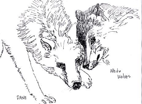 """Wolves"" by Dane Botino"